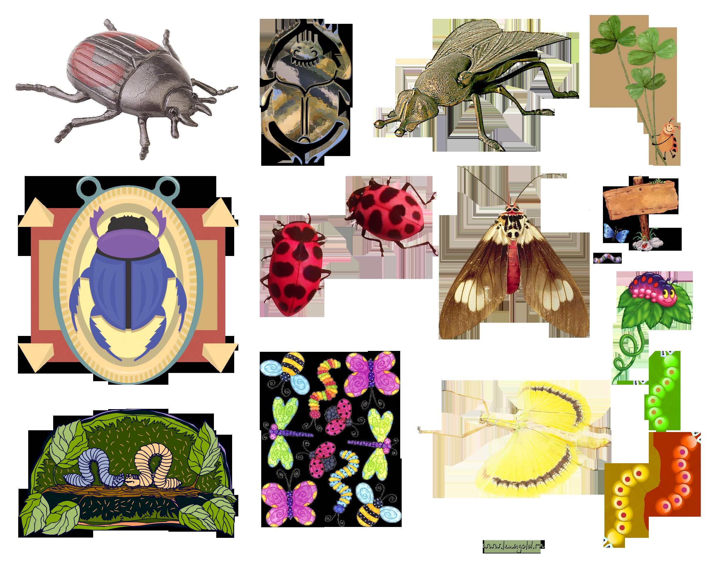 Клипарт нашествие насекомых фото 449-545