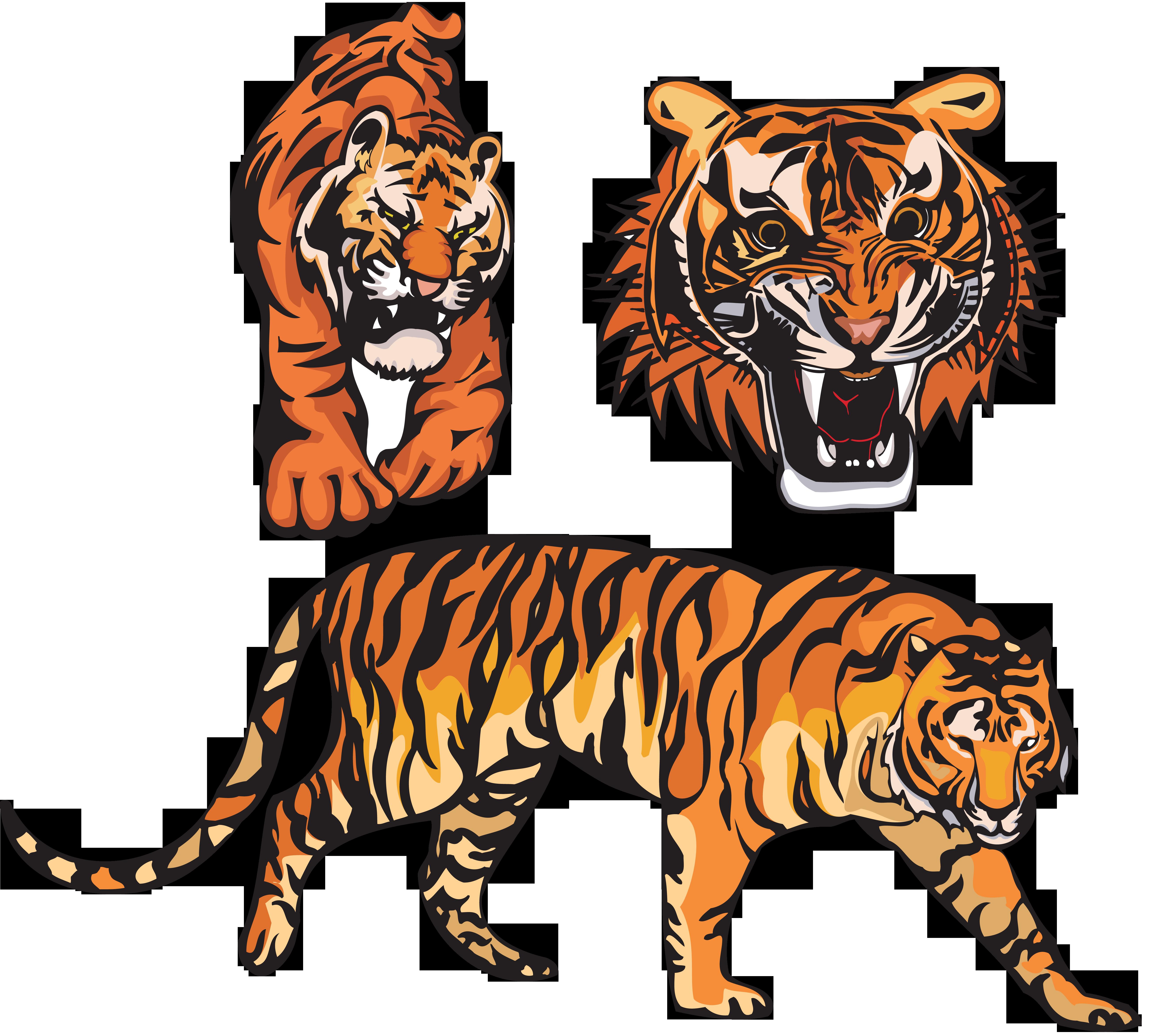 Тигр клипарт, бесплатные фото, обои ...: pictures11.ru/tigr-klipart.html